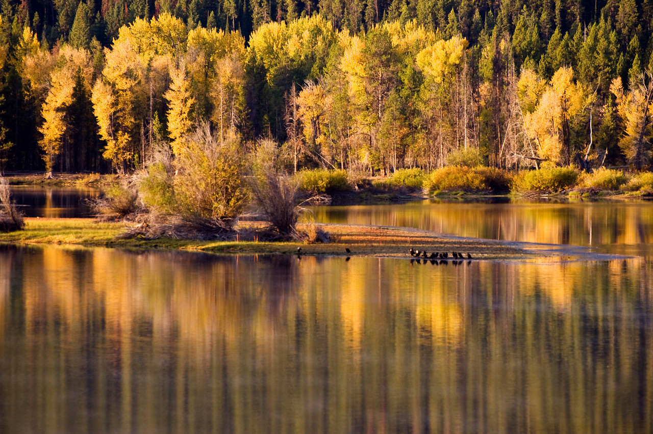 Oxbow Bend - resting cormorants