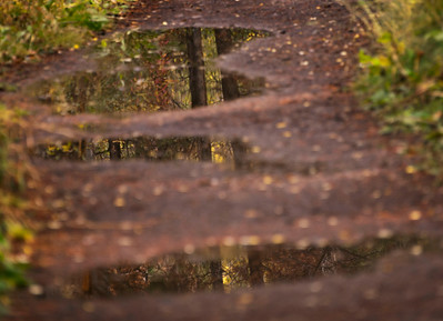 _DSC4126 - crop for puddle reflections