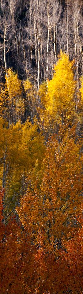 Monte Cristo Gulch, Breckenridge