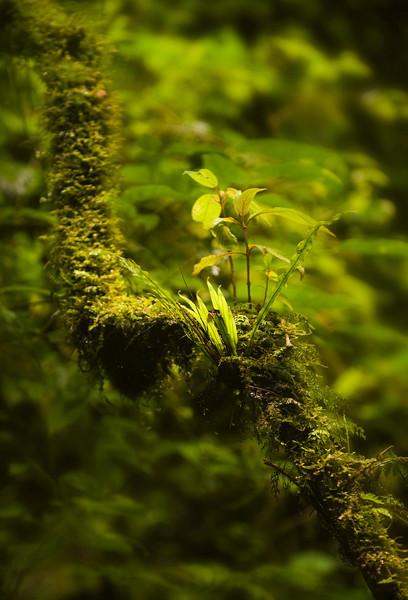 Near Catarátas de Fátima, Bosque de Paz Reserva Biologica