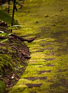 Jardin Botanica Lankester
