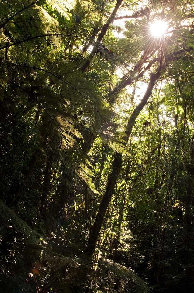 Reserva Biologica Nuboso Monteverde