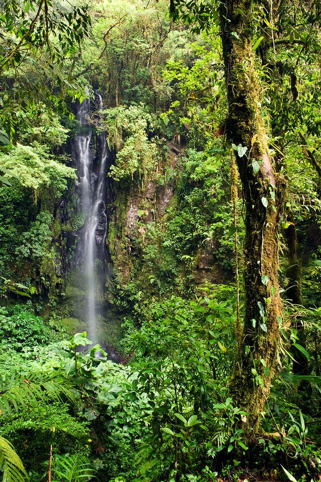 Catarátas de Fátima, Bosque de Paz Reserva Biologica