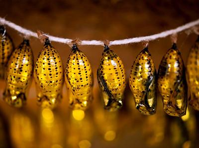Golden Gifts