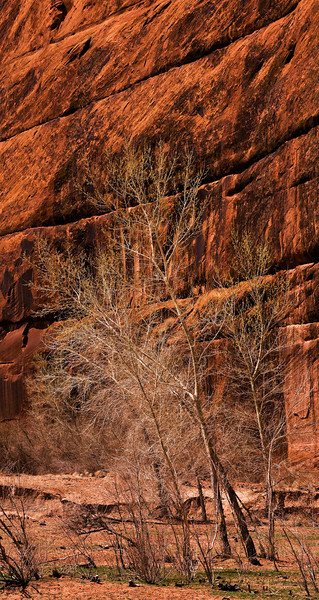 Spring in the bottom of Canyon de Chelly