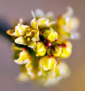 Spring delight