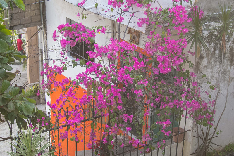 Beautiful colors - bouganvillea, brightly painted walls