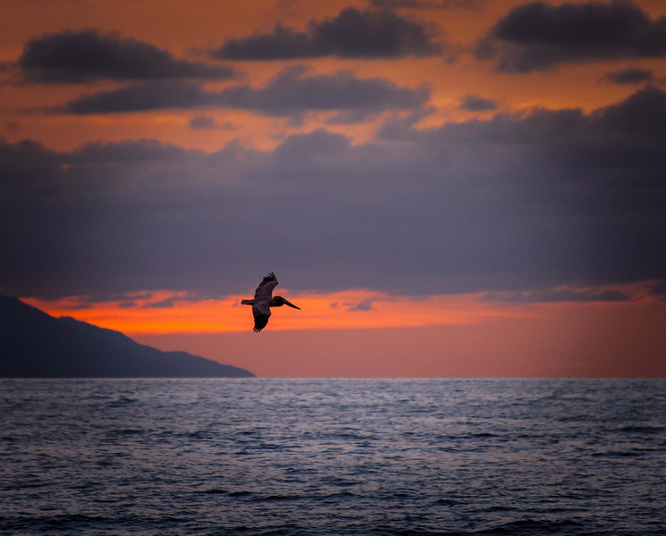 Pelican, sunset.  <br /> Pelicans are among my favorite birds - tie that with a few cervezas, some good company, and a fabulous sunset, and I'm in for a bit of heaven on earth!