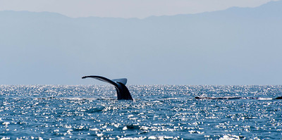 My first whale sighting.  Awestruck.