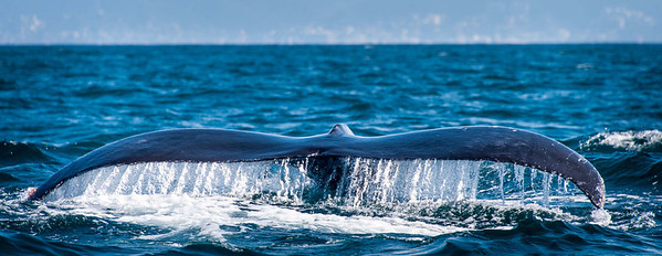And I still love whale tails!