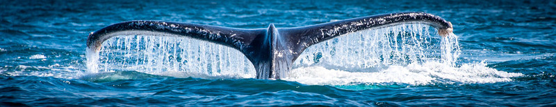 The tail, the barnacles, the water - I'm running out of adjectives!