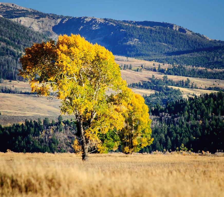 Gorgeous colour, terrain.