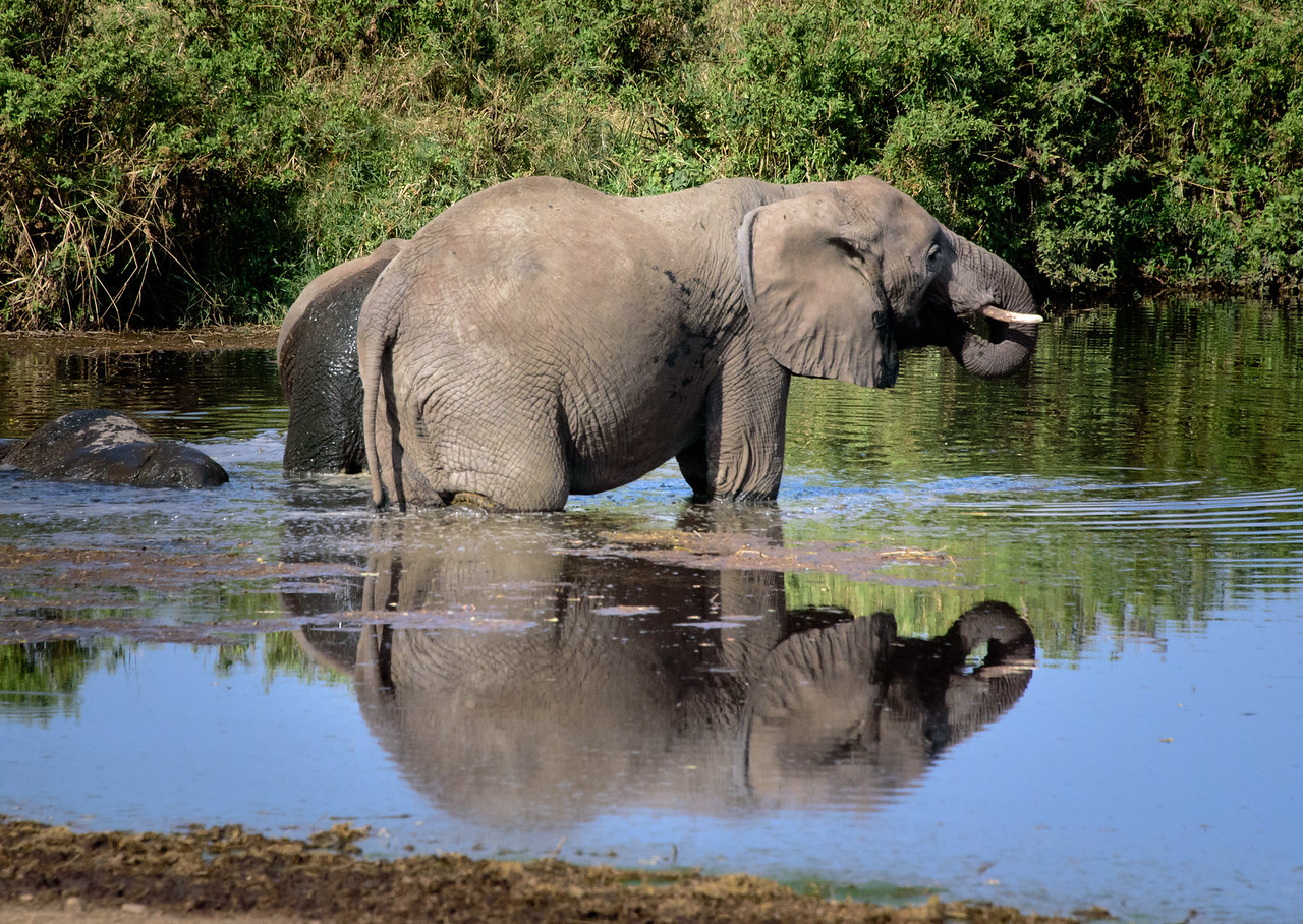 Serengeti Reflections