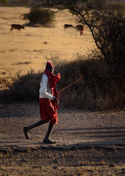 Maasai Light