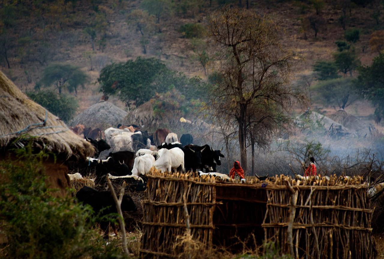 Herding the Cattle