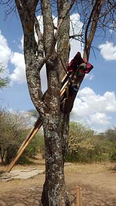 Tool Storage in the Serengeti