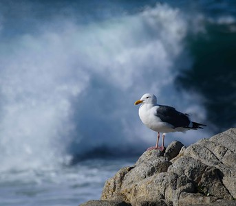 wind, waves, and gulls - pure beach!