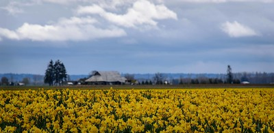 Daffodils!  Delight!!!