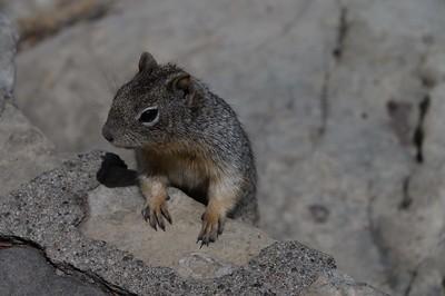 Squirrel . . . beggar