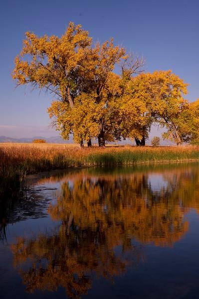 Fall's Beauty on the Prairie