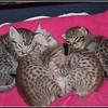 07-05-2011 Ashia Kiwi