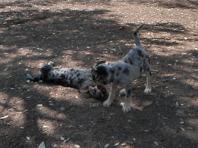 April 2011 A to Z Dog Ranch