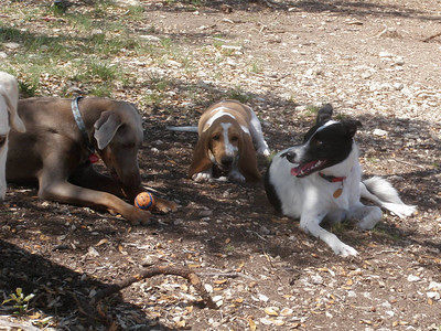Sasha, with the ball, Fergie and Lucy