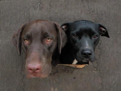 Parker and Nala love the doggie windows