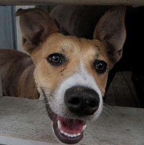 Pippi loves the doggie windows