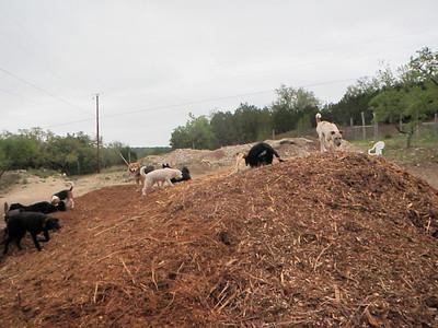 fun on the woodchip pile