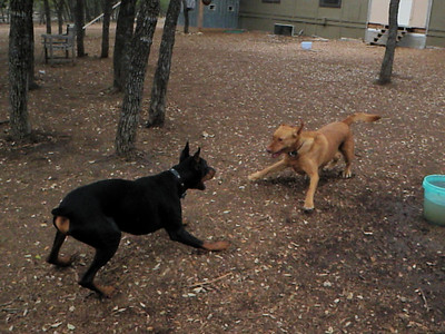 February 2011 A to Z Dog Ranch