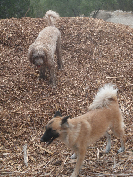 July 2011  A to Z Dog Ranch