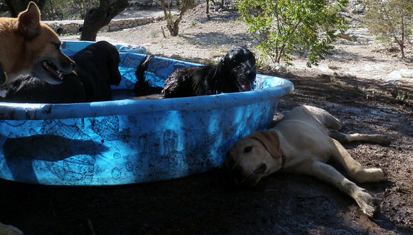 How some pups cool off and go home so dirty