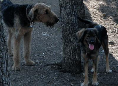 Hondo and Ollie
