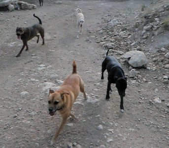 hounds getting their run on