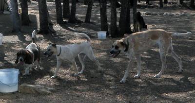 Fergie, Gracie C and Greta pups