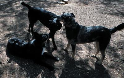 Sugarfoot, Bess and Pepper C