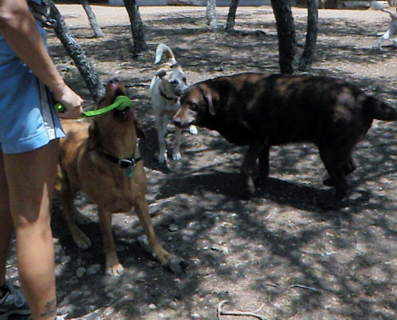 June 2011 A to Z Dog Ranch