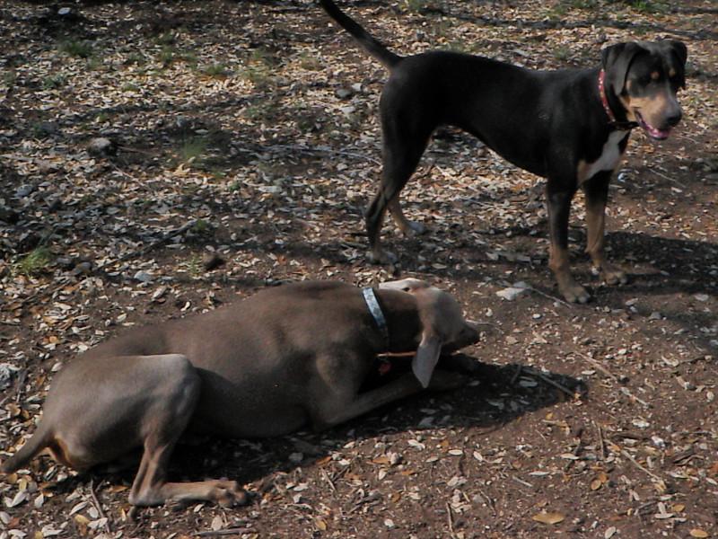 Sasha and Ella
