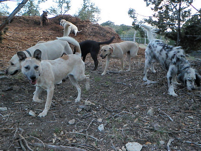 March 2011 A to Z Dog Ranch