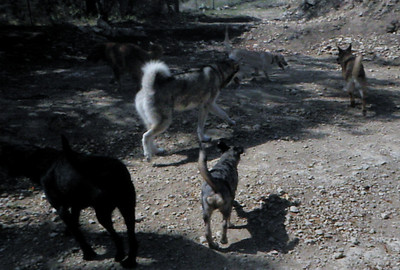 May 2011 A to Z Dog Ranch