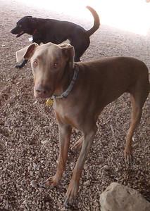 Sweet Sasha Pup