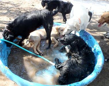 happy wet hounds here
