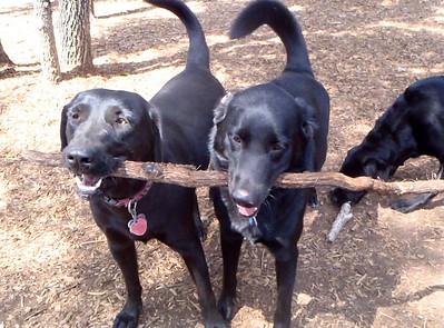 Black Dog Thursday_Casey and Princess Leia