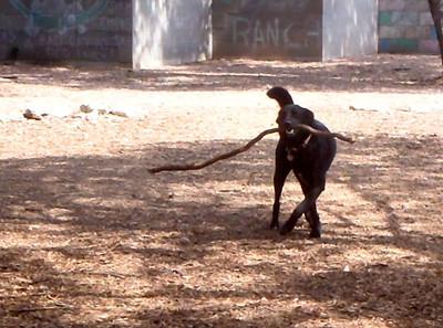 big stick for sweet Leia