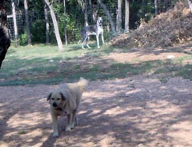 cruisin the yard before they let everyone else out_Sophie Y and Scooby Blue