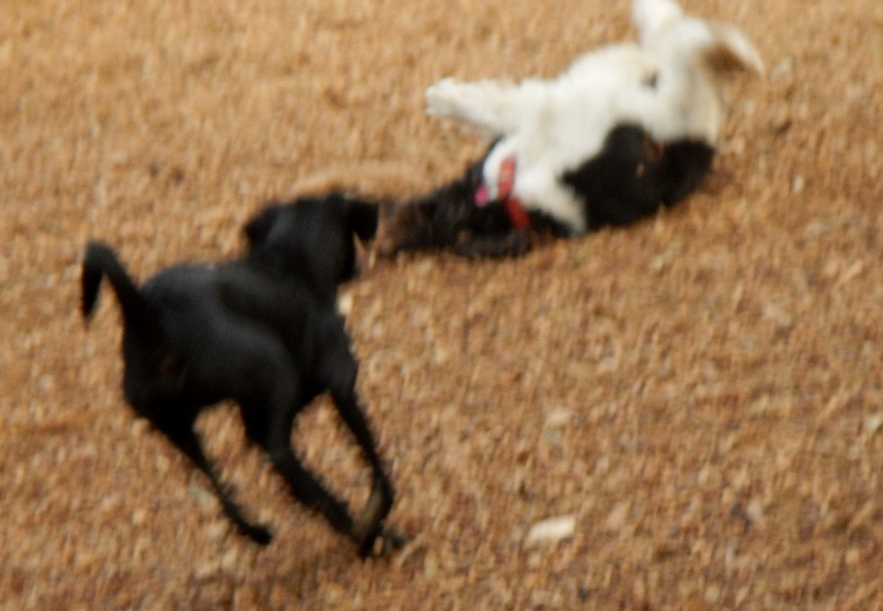 fun out of focus with Bella W and Phelps