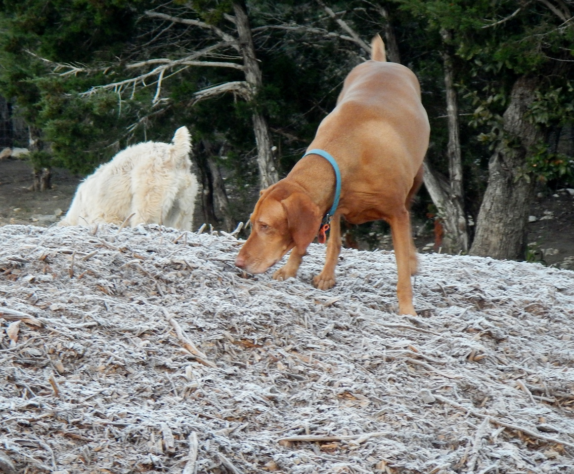 Belle B smelling the frost