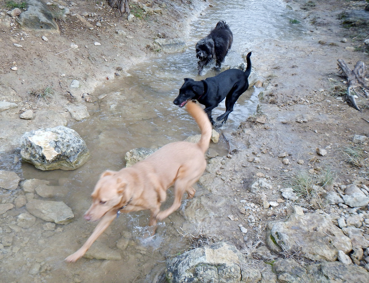 Running the Creek_Ivy, Bella G and Tessa