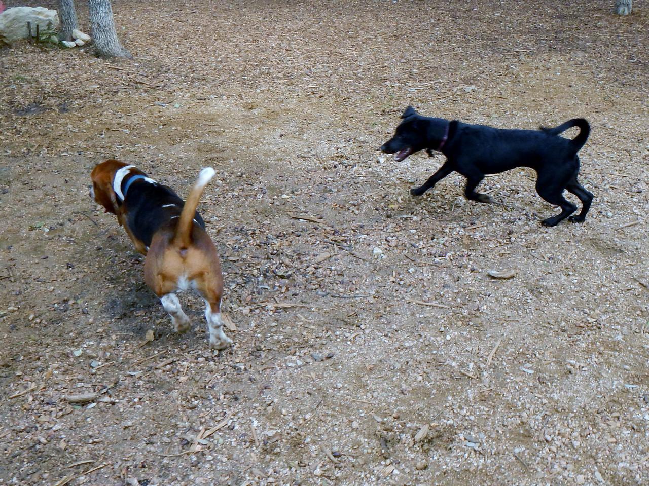 Elvis giving Bella G a run for her money